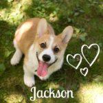 Jackson Gatsby Stubbington of Long Island, NY