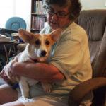 Thursday Adoptables: Tilly And Her Joy