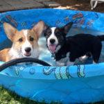 Saturday Smilers: Mahi and Zeus