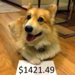 Jasper Islington Makes Bank for Corgis In Need!