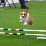 For The Love of the Game: Dog Agility