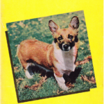 Vintage Corgi Goodness: 1956