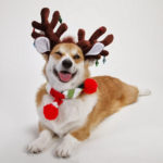Christmastime is serious business. Just ask any #Corgi!