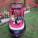 Wheelcorgis Roll On in 2014!