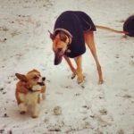 Snow Dogs: Winnie and Ezzie!