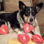 Wanted: Your Valentine #Corgi Pics!