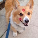 "Yogi ""The Crazy #Corgi"": We Knew Him When!"