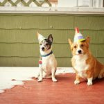 My Very #Corgi Birthday!