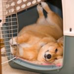 Why an upside down afternoon nap is a BRILLIANT idea!