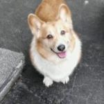 Catching Up with CorgiPals