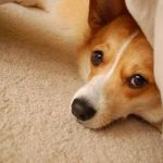 Five Years In: A love letter to Corgi Nation (and a very special girl!)
