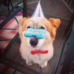 Happy 10th Birthday Rusty!
