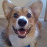 Monday Memories: Loki — aka Little Miss Pudgy Paws!