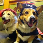 Happy International Talk Like a Pirate Day — #Corgi Edition!