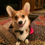 Happy Howl-o-Ween: #Corgis in Costume Friday Finale!