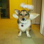 #Corgis in Costumes: It's Howl-O-Ween Week!