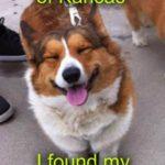 Thursday Adoptables: Put The Smile On a #Corgi Rescuer's Face!