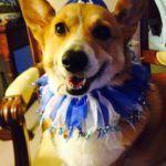 Happy Hanukkah (and a call for Hanukkah #Corgi pics) …