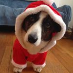Winners List: The Daily Corgi Happy Howlidays Rafflepalooza!