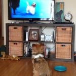 Ellie's Dog Show Dreams!
