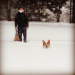 Winter Wednesday: A #Corgi Worth of Snow In Boston!