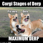 What is DERP?