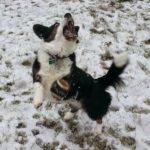 Snow Dogs: Toby On The Ball!