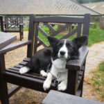 Emma the Town and Country #Corgi of Yorkshire, England!