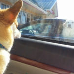 Wednesday Window Watchers : #Corgis On Duty!