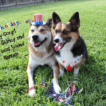 Wishing You a Corgi-licious 4th of July!