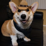Mamas Don't Let Your #Corgis Grow Up To Be Cowboys