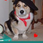 My Funny Valentine, Sweet #Corgi Valentine