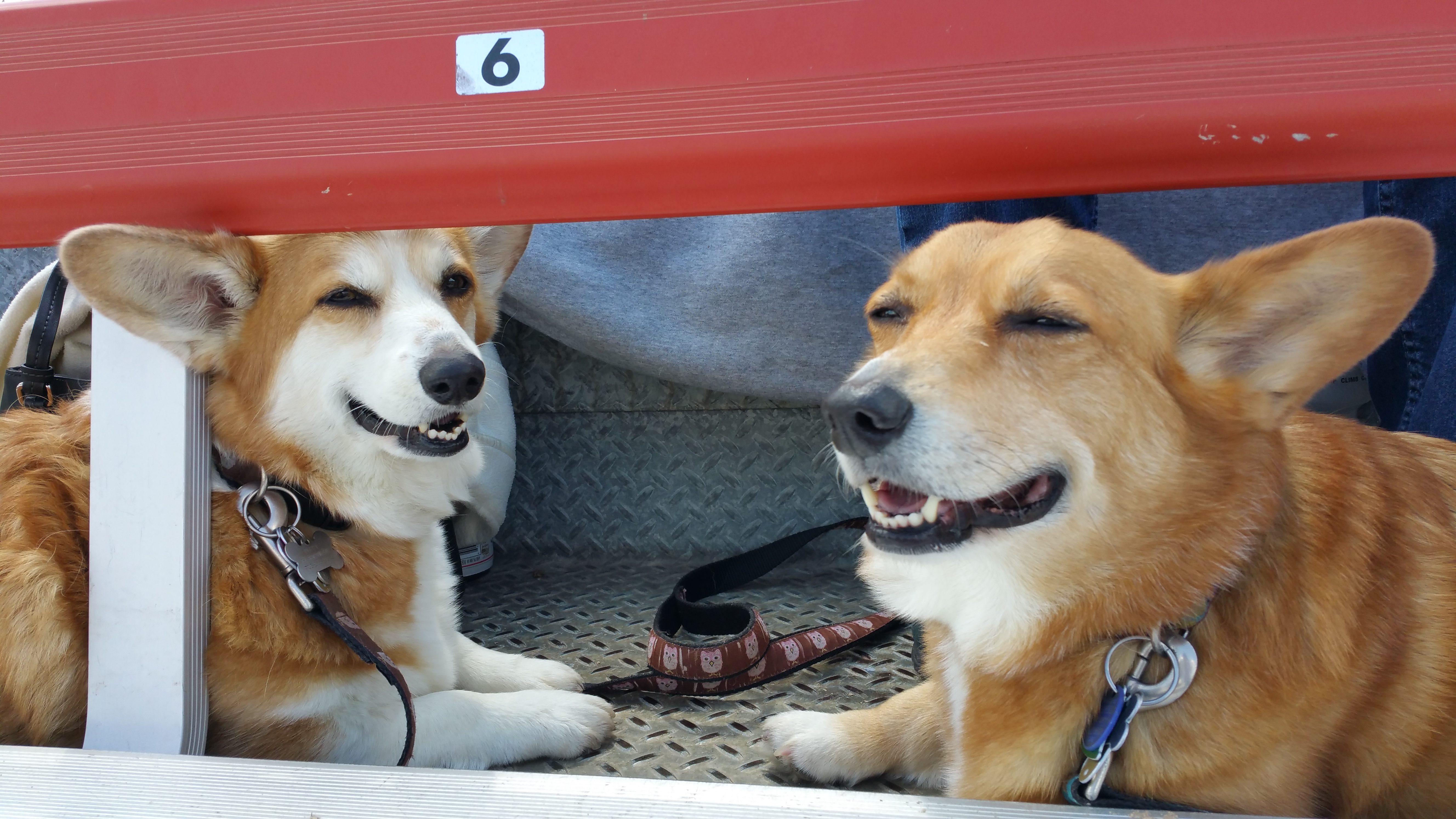 Poppy and Daisy at the ballgame.