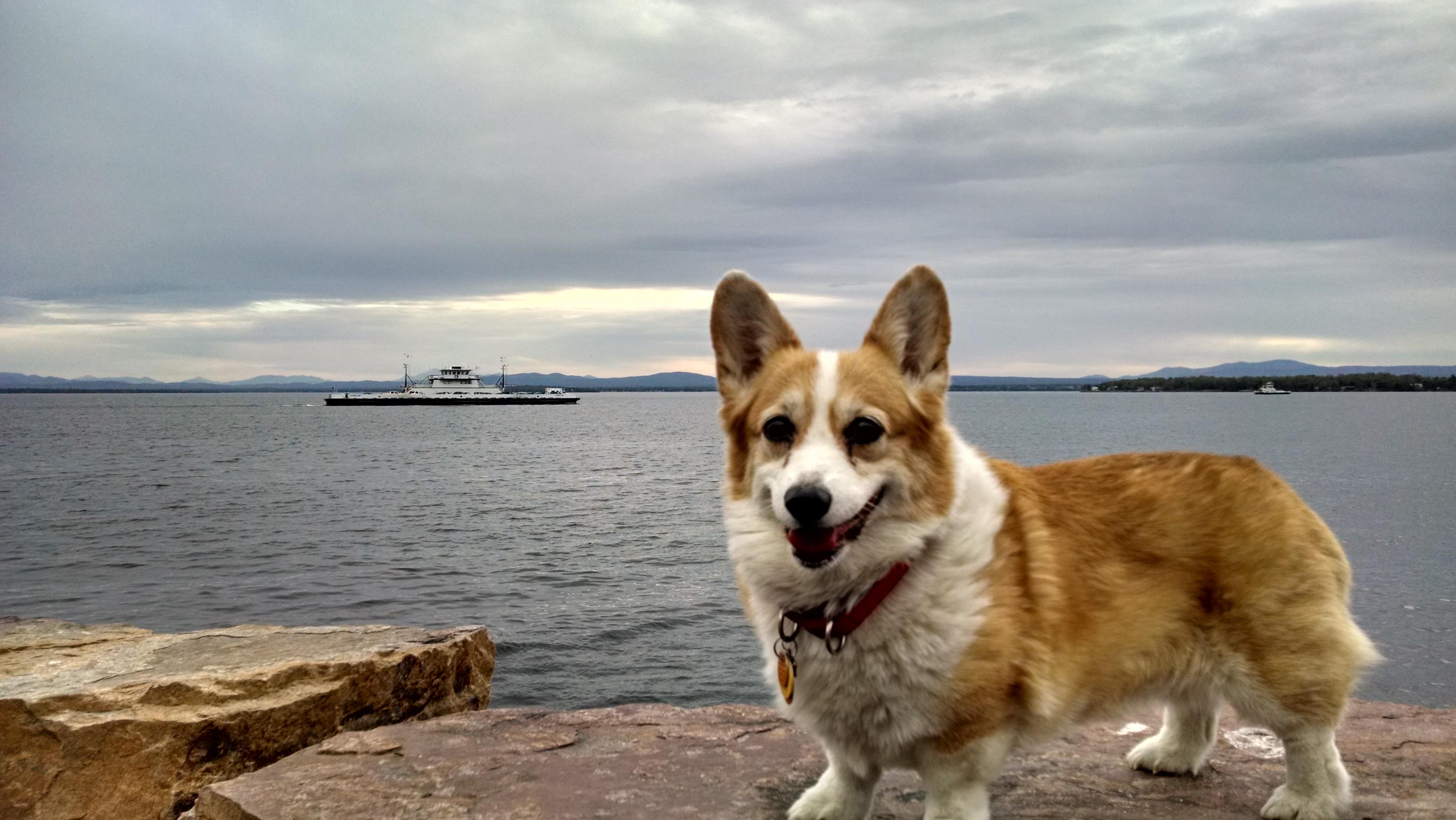 Brandy at the beautiful Lake Champlain