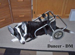 Dancer Napping DM 2