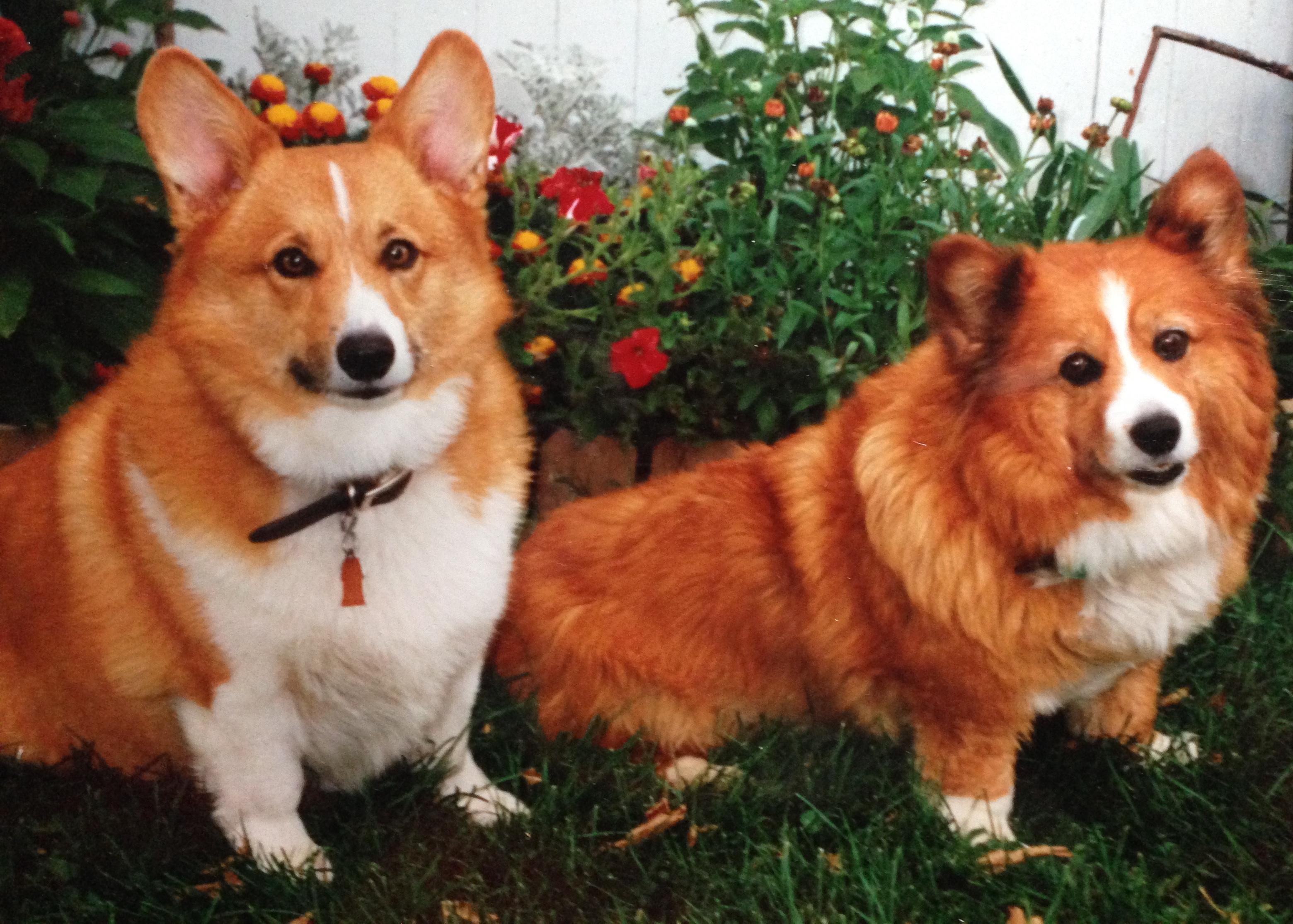 Jake and Lentil