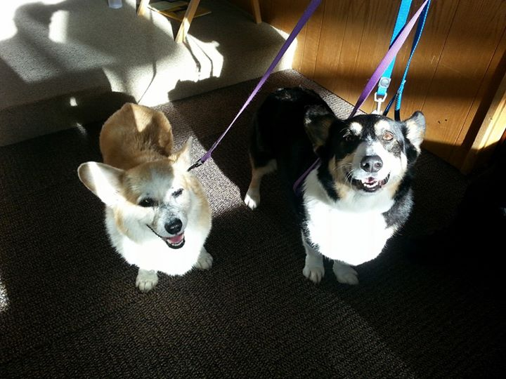 "Bodie and Jasper are smiling because they have just been blessed at an annual Blessing of the Animals church service. Nine year-old Bodie and 12-13 year-old Jasper are rescues who joined their adoptive family in the last two years. Says Mom, ""we can't imagine life without our mature little gentlemen."""