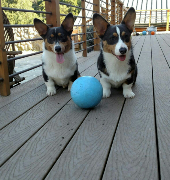 Bella and Buster