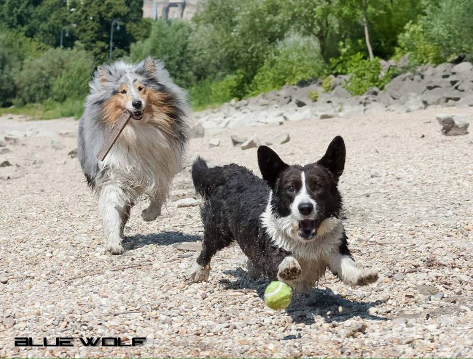 Playing ball with his friend Kósza.