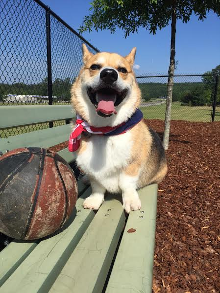 Tommy of Birmingham, Alabama. Smiling with his old nasty basketball that only a corgi could love.