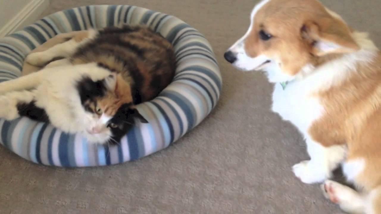 Basil and Pudda (YouTube)
