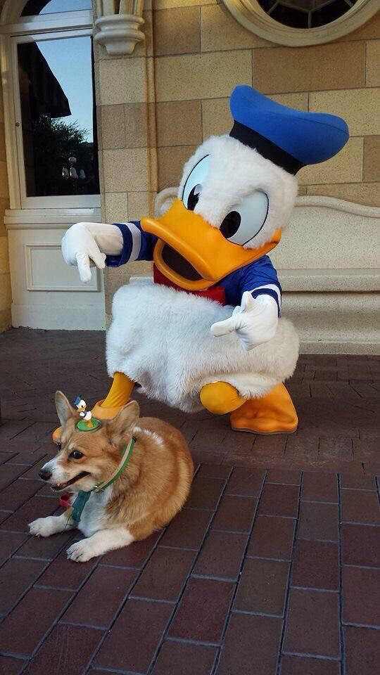 Somebody at Disneyland is amused, and somebody else is NOT. (mashable.com)