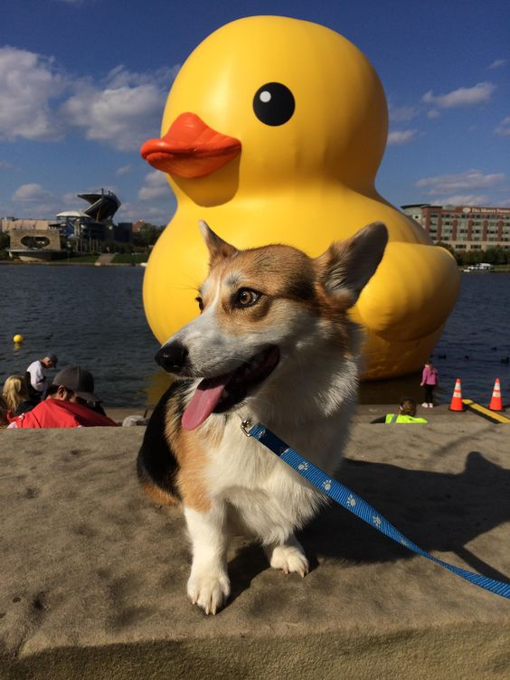 Yoshi and the giant rubber duck. http://imgur.com/QwM6bjm
