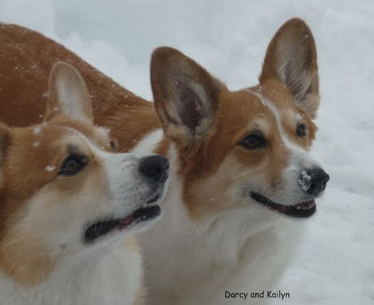 Darcy and Kailyn in the snow.
