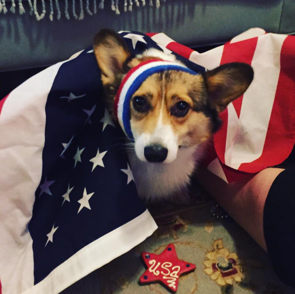 My Corgi, 'tis of thee, sweet land of liberty, of thee I sing.