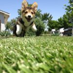 Lift-Off Monday: 10 Corgis Who Believe They Can Fly