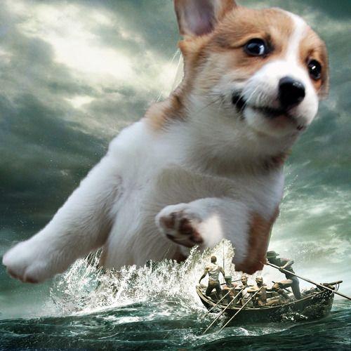 Sea monster version Corgkrakken. You're gonna need a bigger boat. http://bit.ly/29OJr47