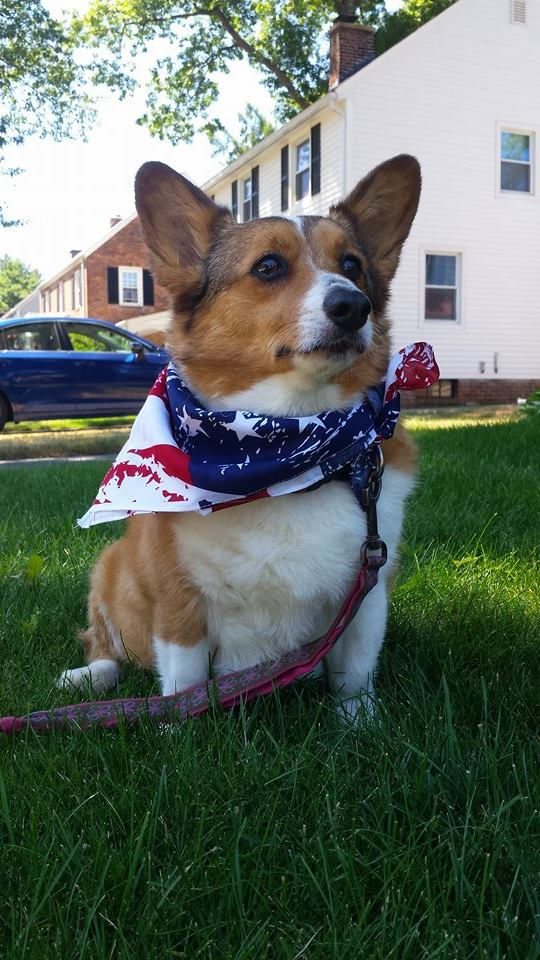 Lucy of Massachusetts got a tubbie and a new bandana on the occasion of America's birthday.Beautiful!