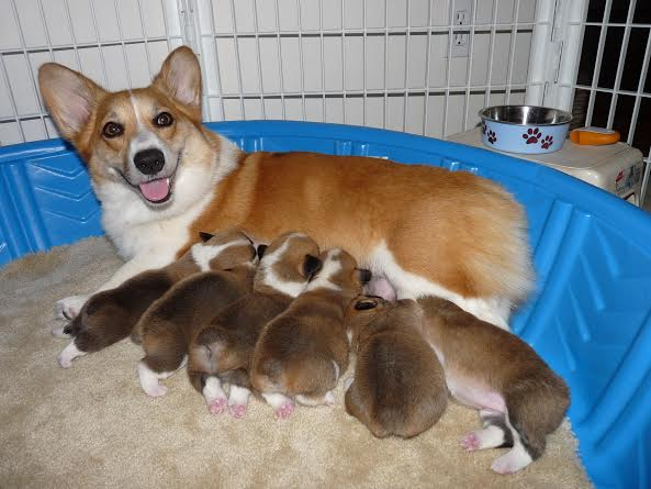Proud mom Kailyn and pups!