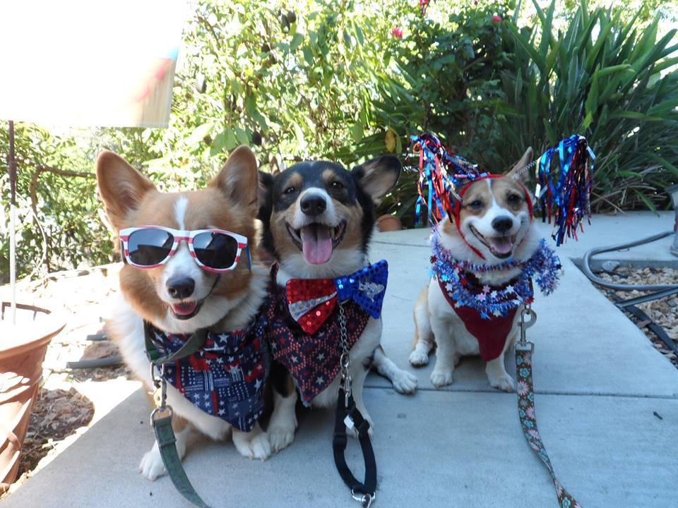 Sidney, Copper and Connie of California